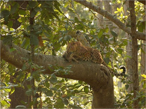 Safaris and Wildlife Viewing At Pench