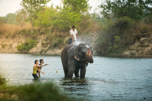 Elephant Safaris Chitwan National Park 3x2