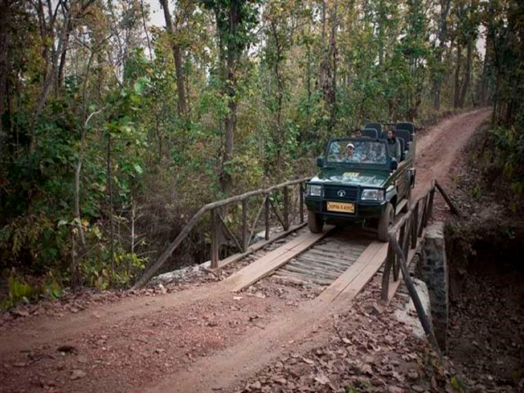 Safaris & Wildlife Viewing - Pashan Garh, Panna National Park