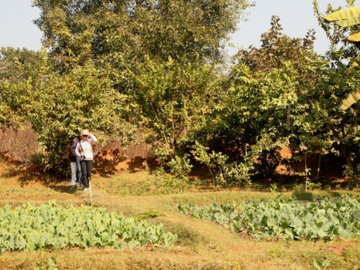 Organic Garden at Pashan Garh, Panna National Park