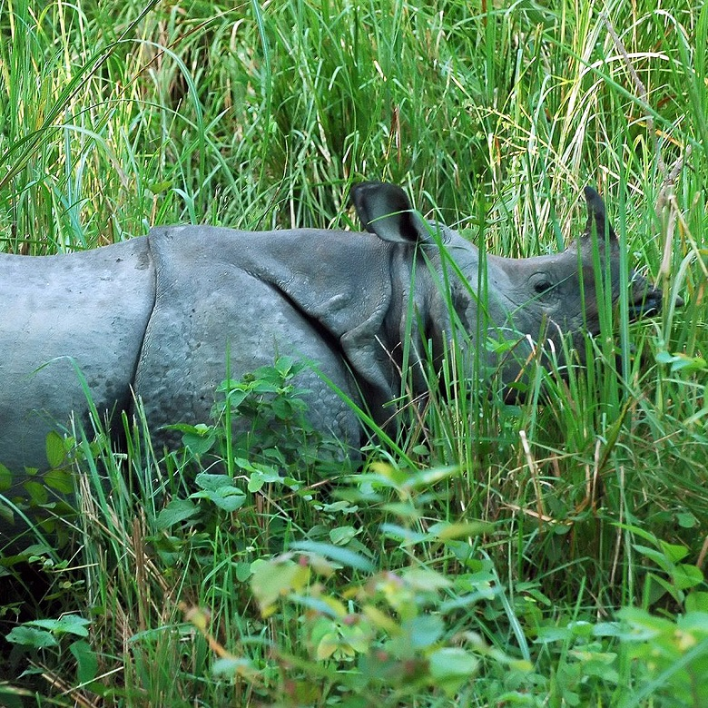 Wildlife Viewing with Taj Safaris Chitwan